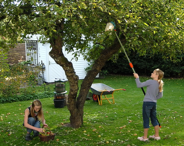 Æble-plukning, Foto Nina Ewald