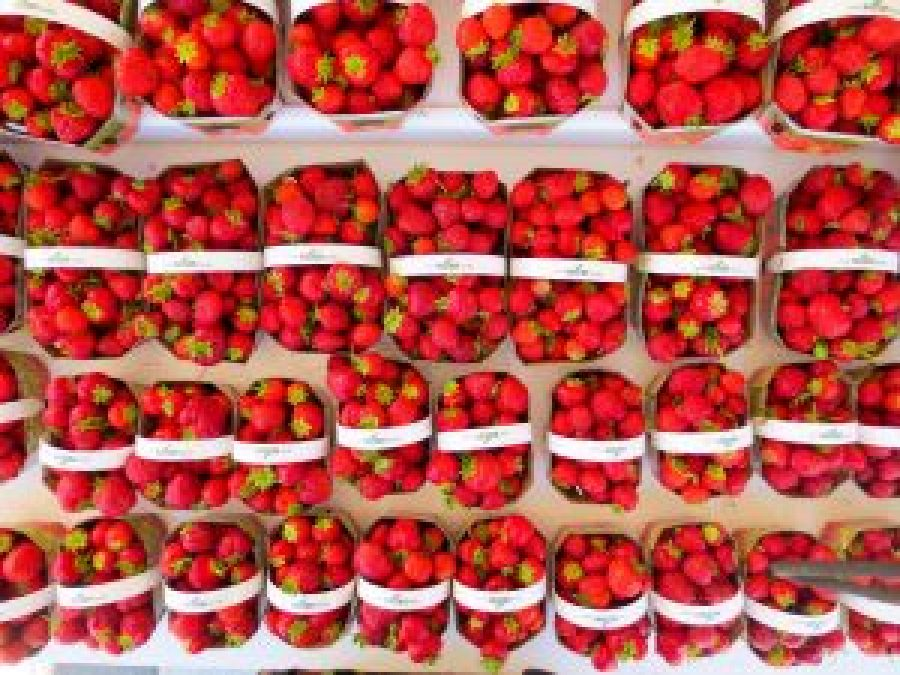 Strawberries at Ottawa Farmer's Market