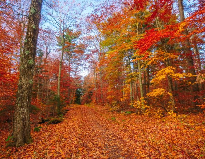 The Ultimate Gatineau Park Trails Guide 2020
