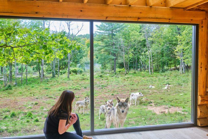Quebec Wolf Cabin