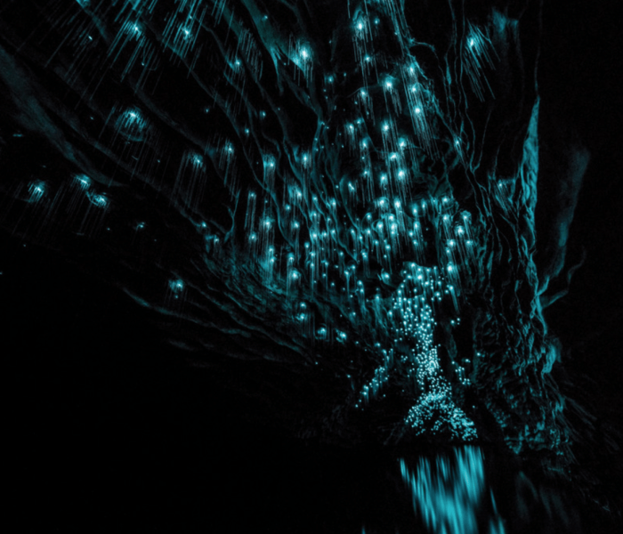 Float Beneath Living Lights in the Waitomo Glowworm Caves