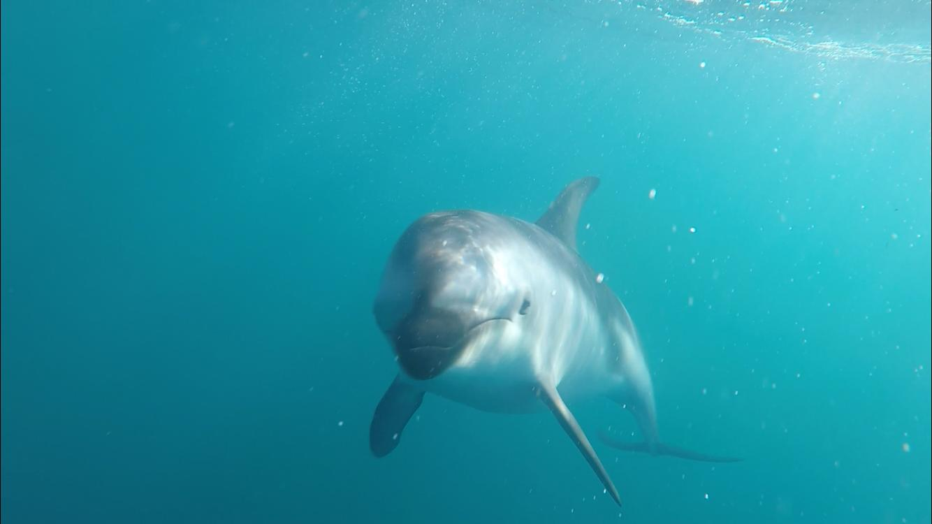 Swimming with Wild Dolphins in Kaikoura: Worth Waking Up at 4 a.m.