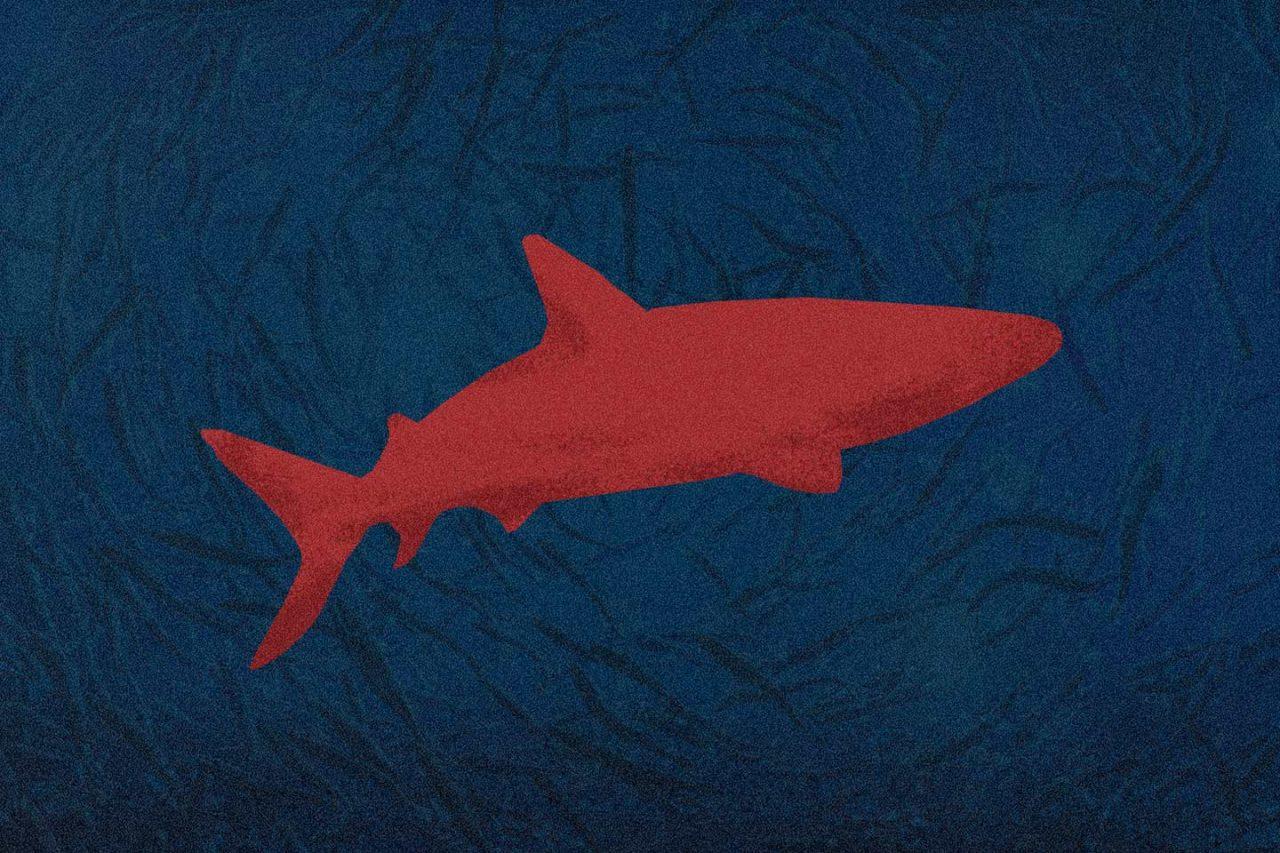tiburones-indefensos-1280x853