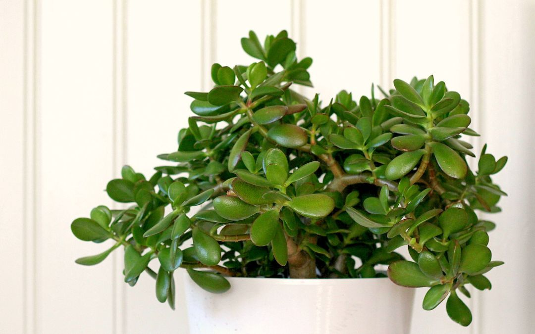 De fem beste feng shui plantene for bedre inneklima