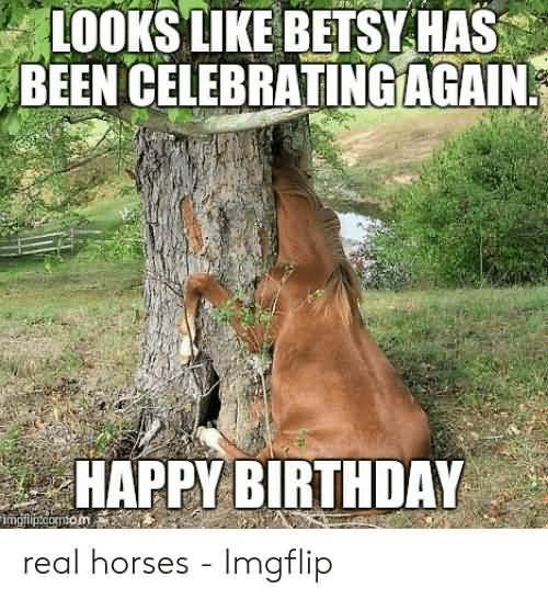 15 Hilarious Happy Birthday Horse Meme Photos Nine Bro