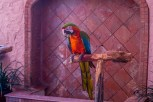 Local Macaw at the Inn