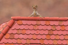 Up on the rooftops:?