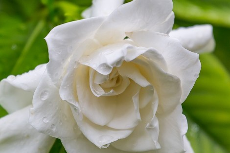 End with a white rose.