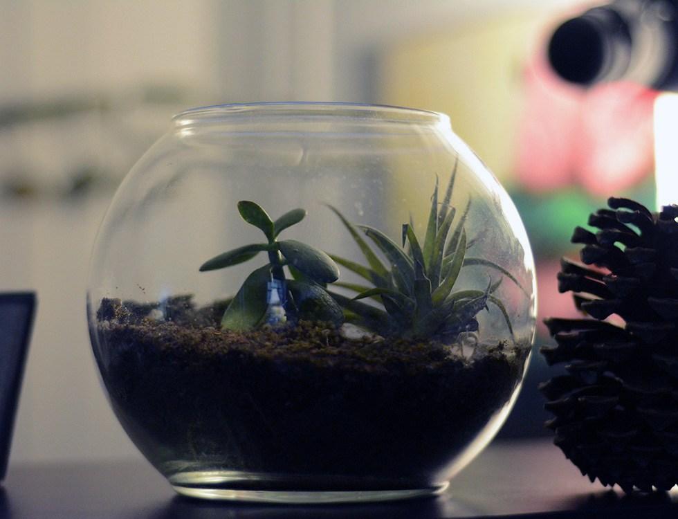 my husband has a terrarium