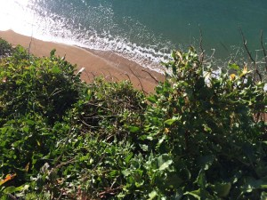 The Edge of the Cliff in Dorset - The Jurassic Coast