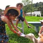 casa da ovelha bento goncalves - Castelinho Caracol: um Appstrudel divino, e muito mais!