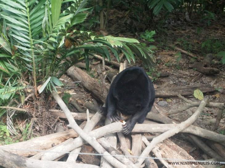 Beruang madu Balikpapan
