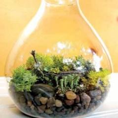 terrarium dalam botol