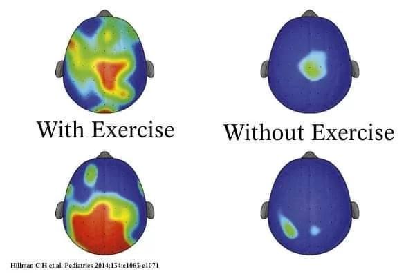Wpływ aktywności fizycznej na pracę mózgu - wpływ ćwiczeń