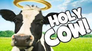 Cow with a halo, Holy Cow