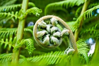 palm-fern-2245814_1280