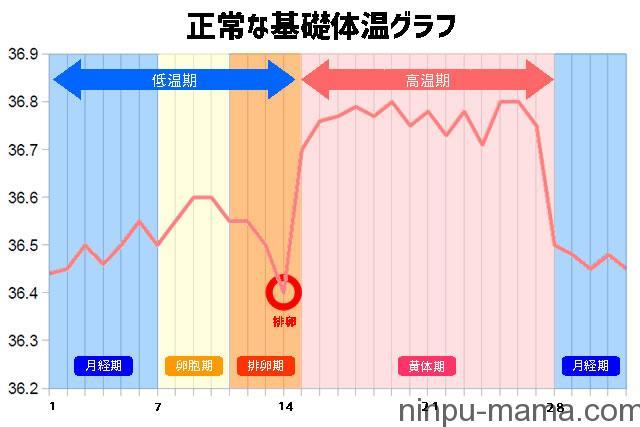平均的な基礎体温表グラフ