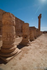 Palmyra-21