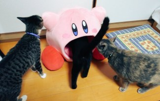 inhaling-kirby-plush-cushion-jun62019