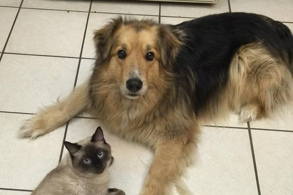 Max, collie missing from just over the new Nipawin bridge