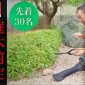 11月28日(日)庭木剪定実践講習会 開催のお知らせ