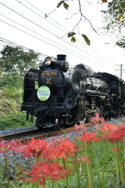 The Paleo Express with some red-spider lilies in Nagatoro, Japan