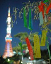 أوراق تانزاكو الملونة في طوكيو   عبر المصور Dainosuke60