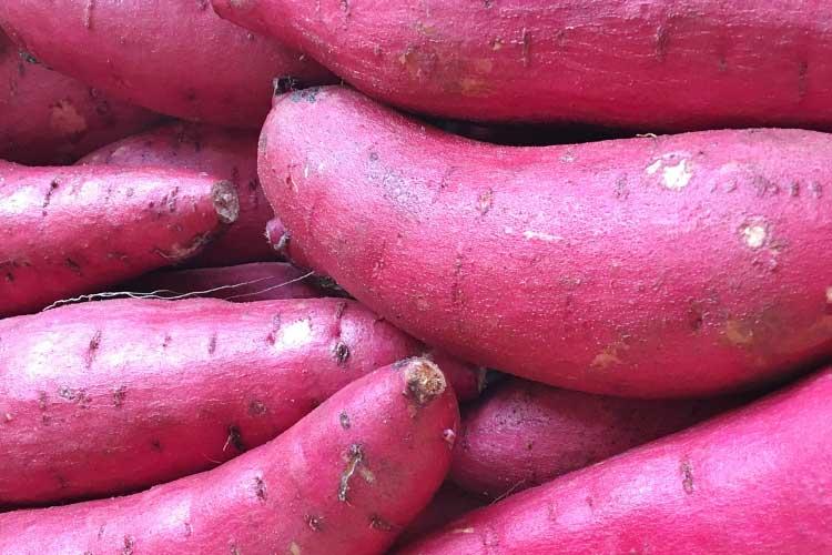 SATSUMA IMO - japanische Süßkartoffel
