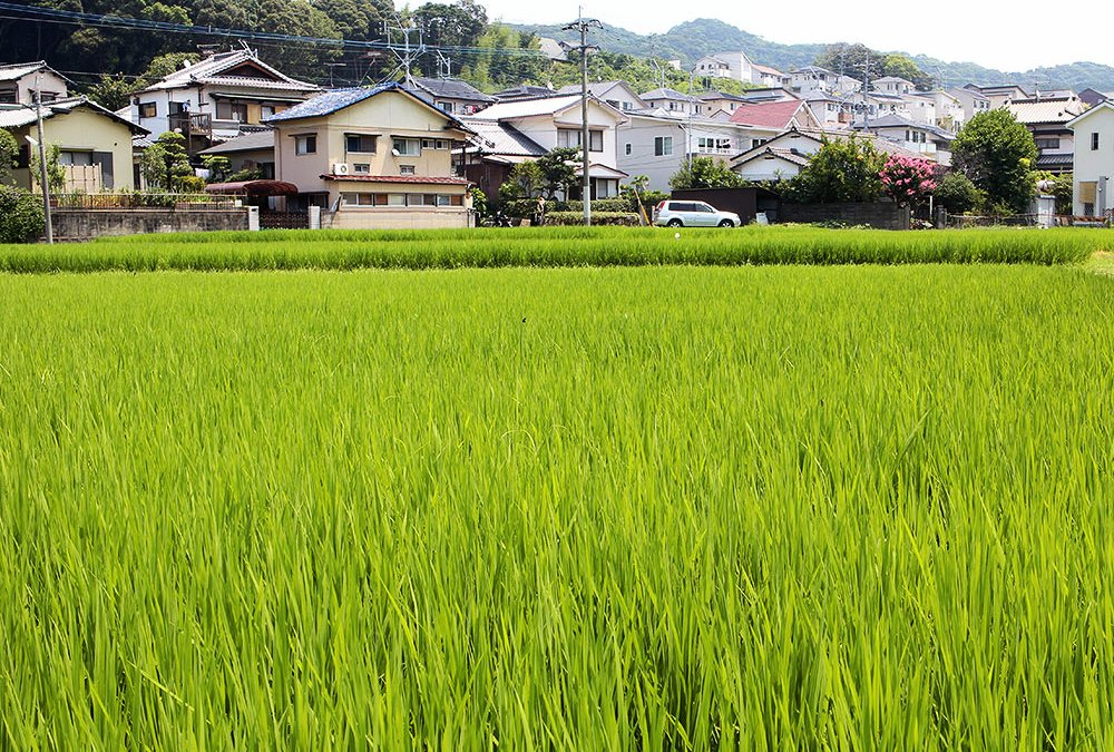 Japanische Feiertage – 23. November – Arbeitsdank-Tag – Kinrō Kansha no Hi