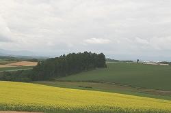美瑛の丘(奥に見えるのがケンとメリーの木)