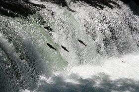 サクラの滝