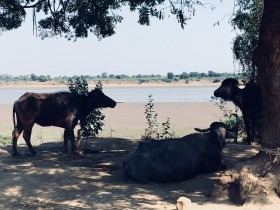Gujarat, India, 2018