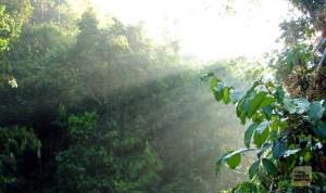 সকালের মিষ্টি রোদ চুইয়ে আসছে গাছের ফাঁক গলে (ছবি: লেখক)