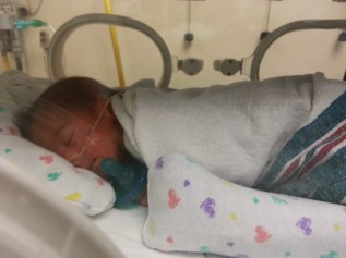 Nikoh in his incubator