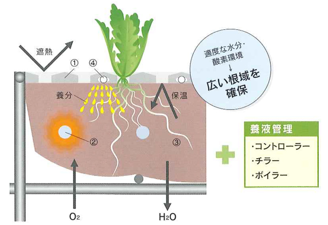 培地冷却型養液栽培システム