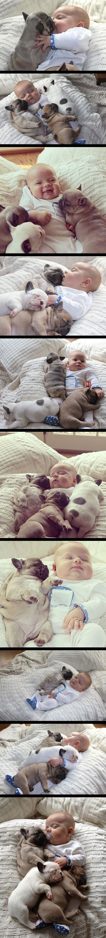 I defy you to find a cuter image of a baby and a dog