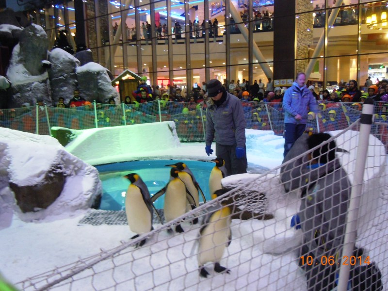 We did end up seeing penguins after all