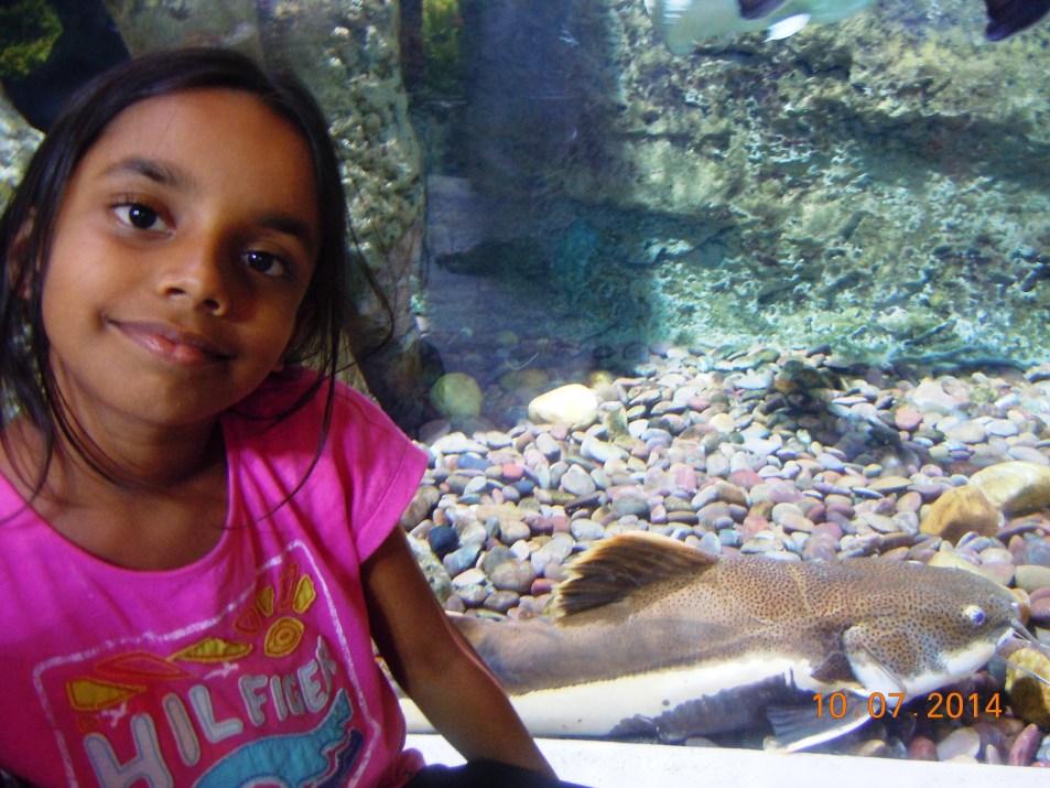 In the Dubai aquarium