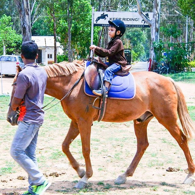 Ferrying Piglet to horse riding