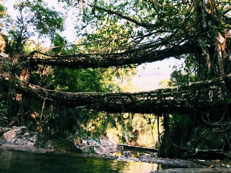 The Double Decker living root tree bridge