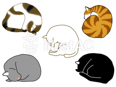 丸く寝る猫