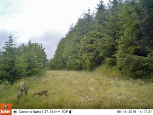 Deer at Mount Rainier Gateway Protected Area