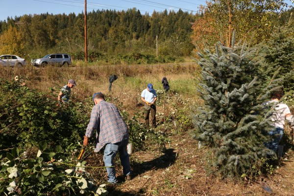 volunteers-make-room-for-trees-at-ohop
