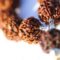 Rudraksha, the Power Bead