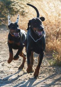 Nitro chasing Argo