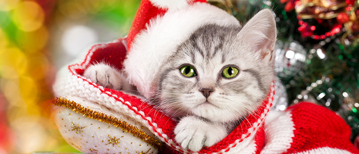 10 Christmas Gift Ideas for Cats