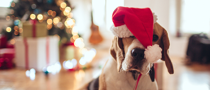10 Christmas Gift Ideas for Dogs