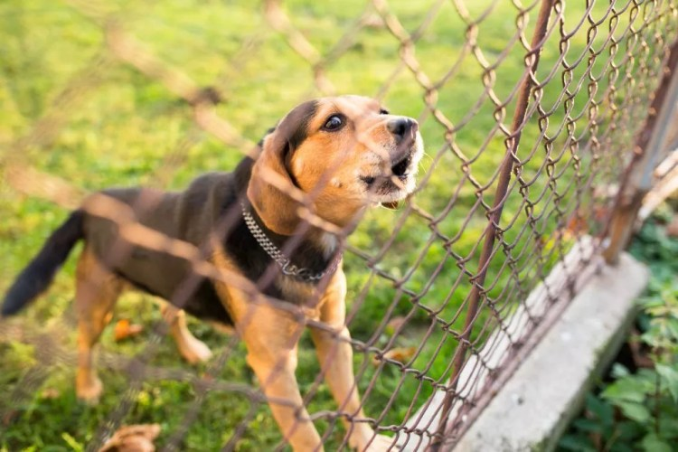 stop dog barking when left alone