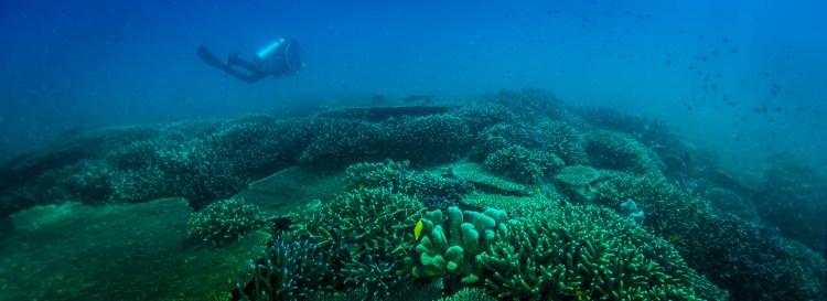 Sipadan Coral reef
