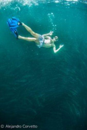Snorkel sobre el cardúmen de barracudas